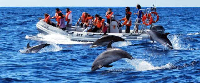 Dolfijnen bij Sao Miguel