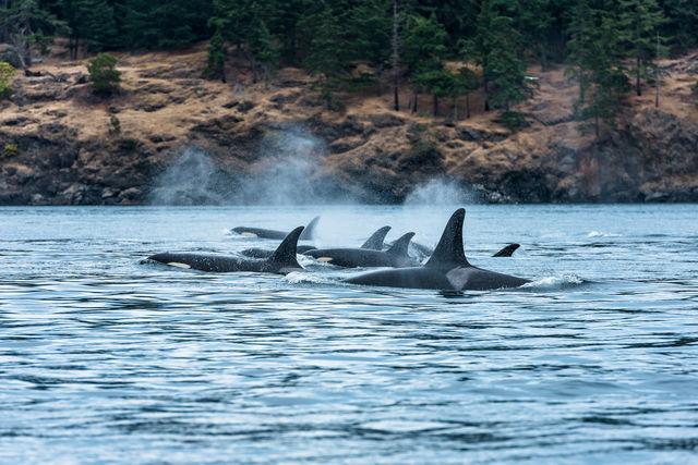 Orka's Vancouver Island