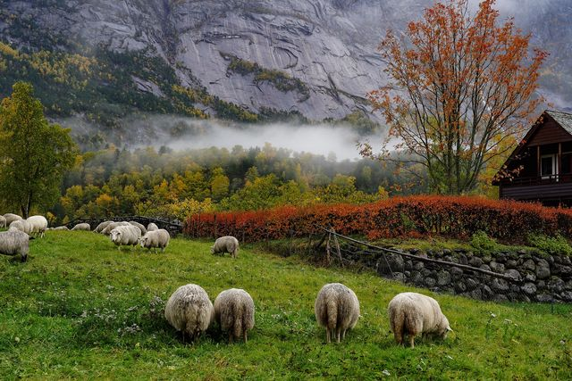 Boerderij Noorwegen