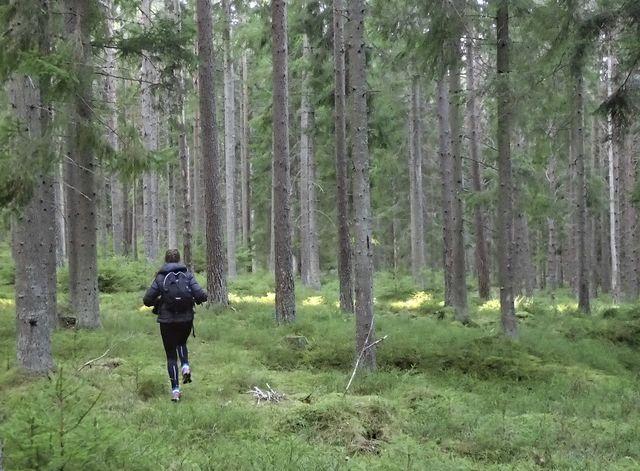 Hiken in Zweden