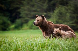 Wildlife spotten in Oost-Canada