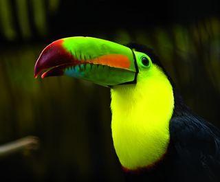 Mooiste natuur van Costa Rica