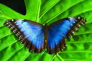 Mooiste dieren in Costa Rica