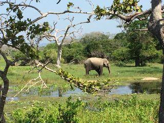 De mooiste natuurparken van Sri Lanka