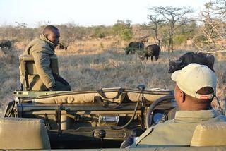 Tips in de omgeving van het Krugerpark in Zuid-Afrika