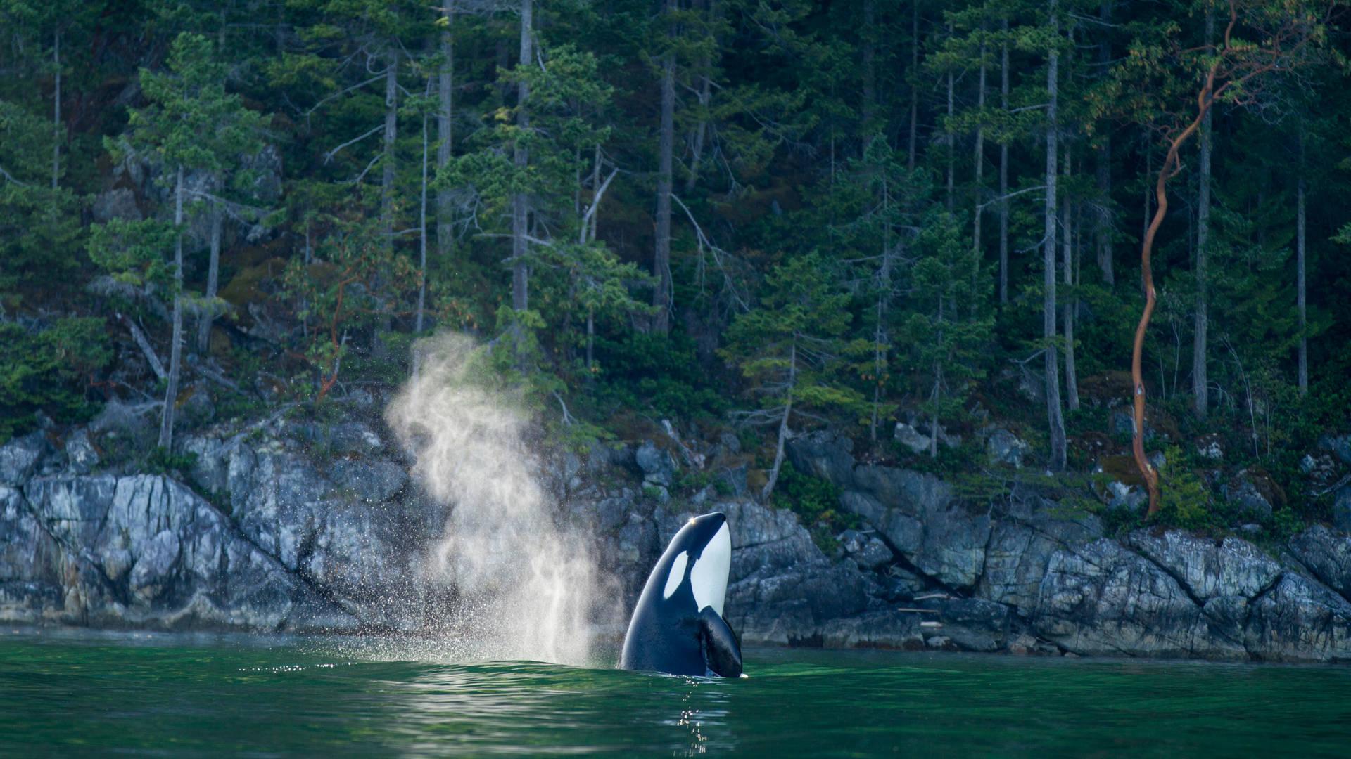 Orka bij het Nimmo Bay Resort
