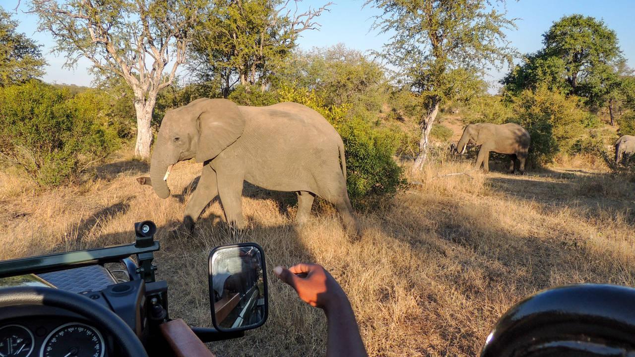 Olifanten in Kruger National Park