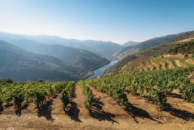 Wijn vallei van Douro