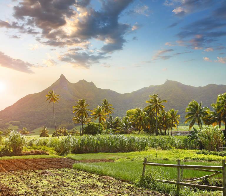 Suikervelden, Mauritius