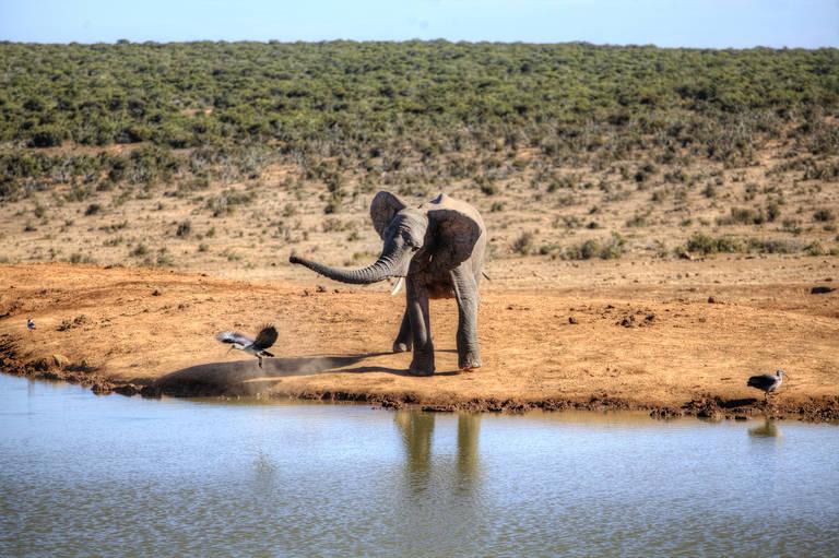 Een speels olifantje in Addo Elephant National Park
