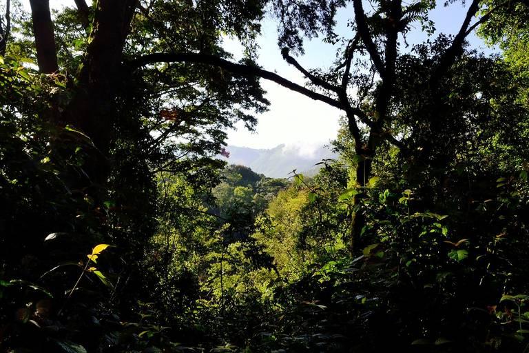 Doorkijkje in Bwindi Impenetrable Forest